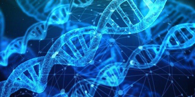 ДНК у человека