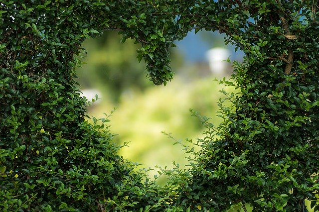 Сердце в кустах