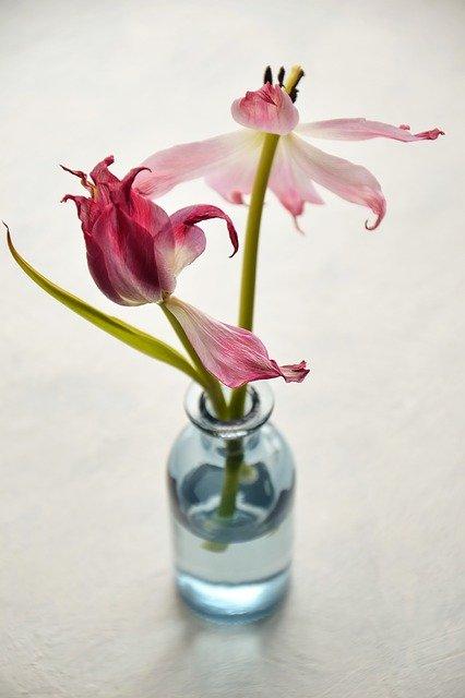 Вянущие цветы